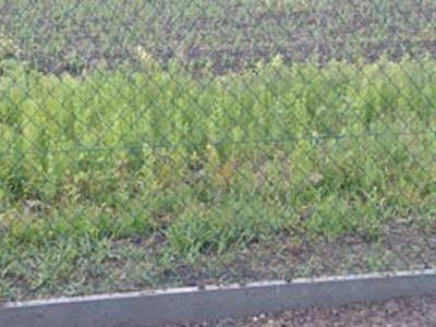 Stebud galeria ogrodzenia 5