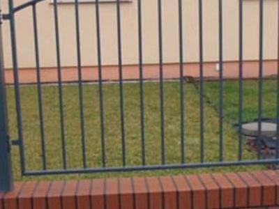Stebud galeria ogrodzenia 14